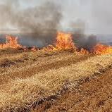 Stroh auf dem Feld verbrennen